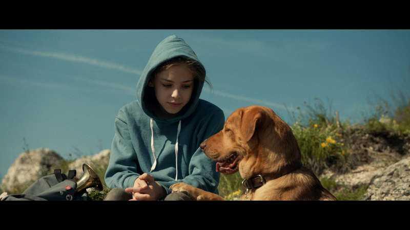 Ett riktigt hundliv  Lili och hennes hund Hagen innan allting går fruktansvärt fel.