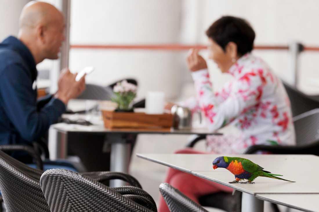 Restaurangbesökare i Sydney passade på under fredagen då det åter blev tillåtet att äta ute.