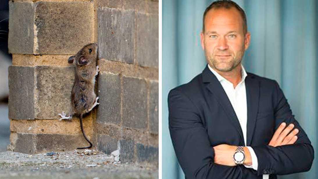 """""""Det är jättemycket möss i år"""", säger Joakim Olsson, presstalesperson Anticimex Uppsala län."""