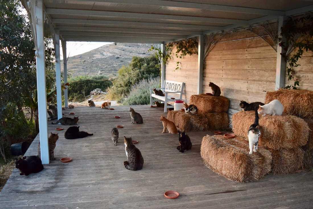 Drömjobbet för den som älskar katter.