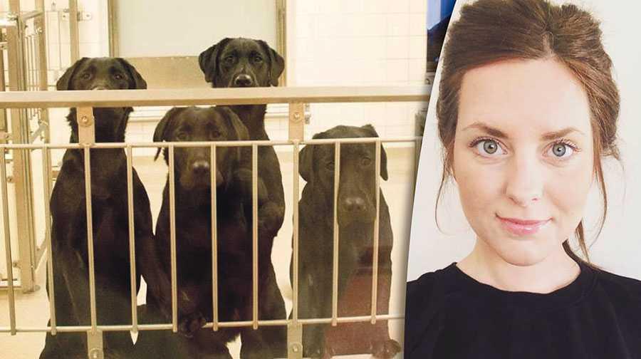 Göteborgs universitet borde ha lyssnat på opinionen och låtit oss i Djurrättsalliansen omplacera och rehabilitera hundarna i kärleksfulla hem, skriver Malin Gustafsson.
