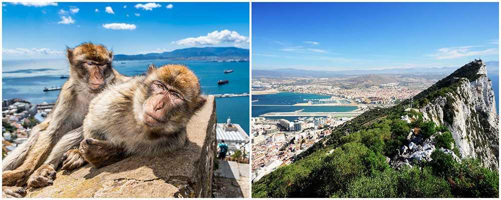På Gibraltarklippan lever vilda apor, men de har vant sig vid människor och är inte farliga bara man är försiktig.