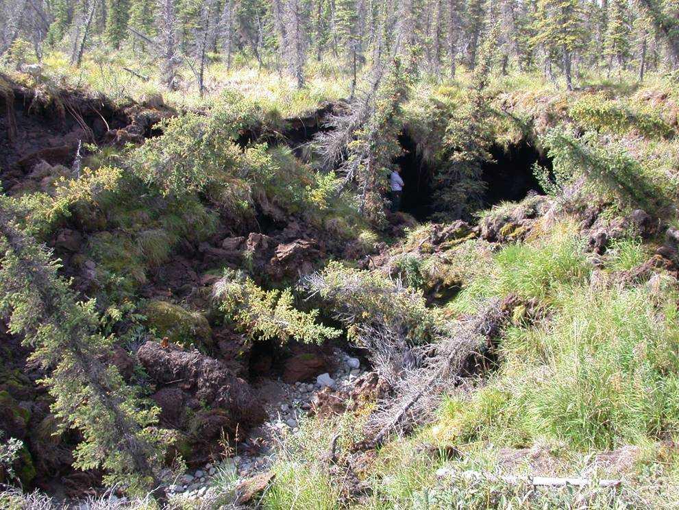 Tinande permafrost har orsakat markkollaps i Alaska. Arkivbild.