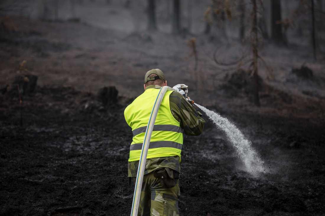 Under extremtorkan 2018 härjade skogsbränder i stora delar av Sverige. Arkivbild.