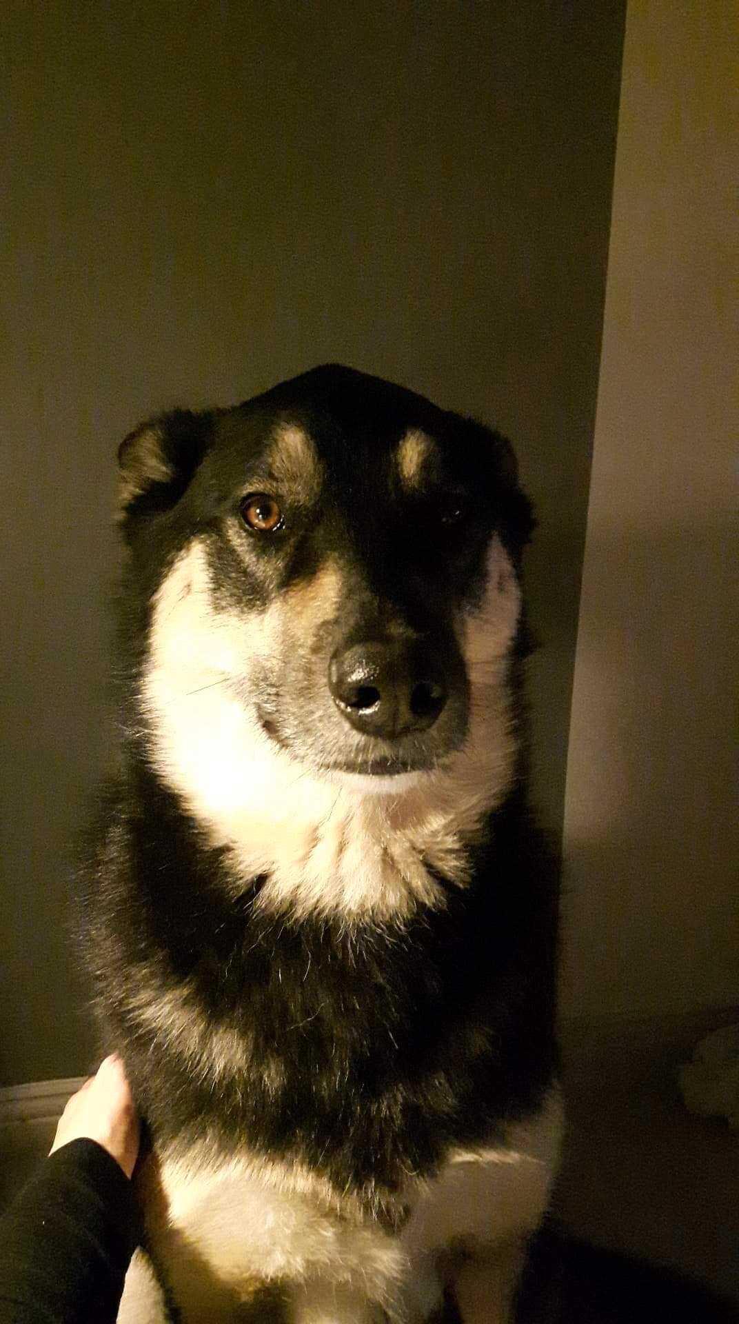 Ralf  kompis och räddare i nöden – hunden Rocky som är en bladning mellan Samojed, Sibirien Husky, labrador och Golden retriver.