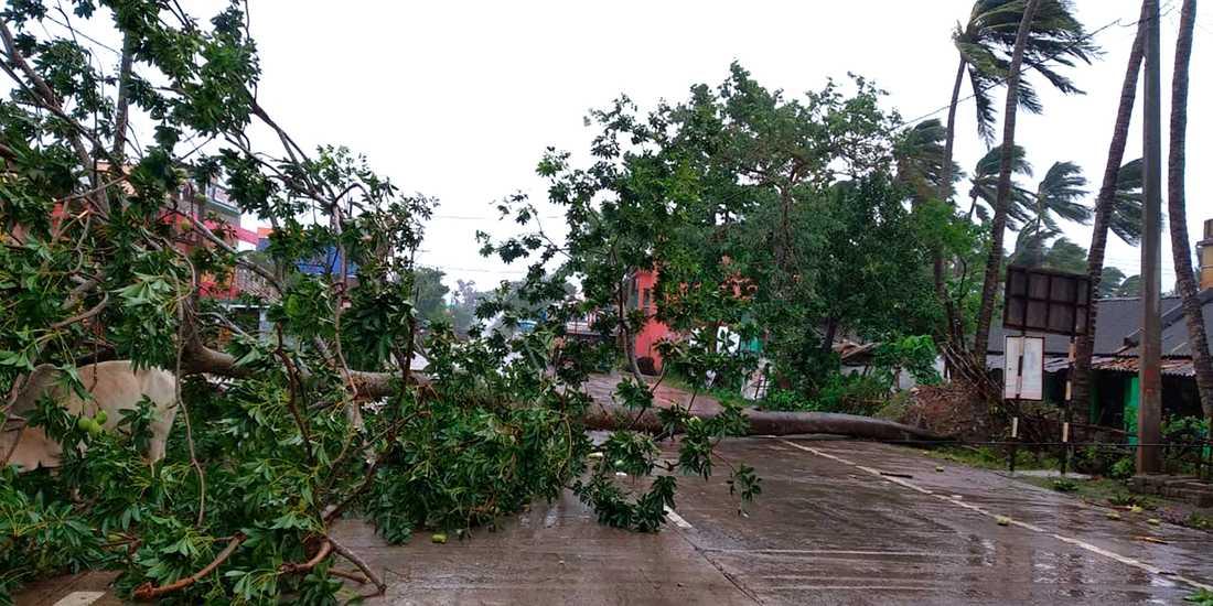 Nedslitna träd över en väg i Odisha i Indien strax efter att cyklonen Amphan dragit in över land på onsdagen.