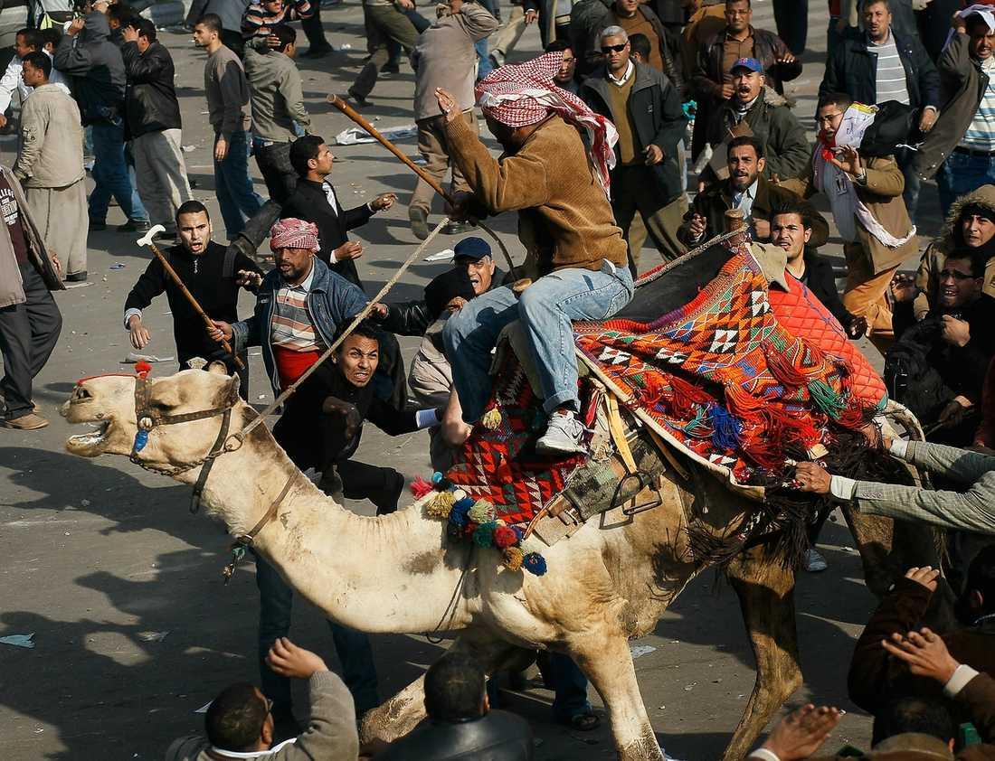 kairo – en krigszon Aggressiva Mubarakanhängare rider in på Tahrirtorget och plöjer rakt in i massan av demonstranter. Sent i natt rapporterades tre personer döda och 1 500 skadade.