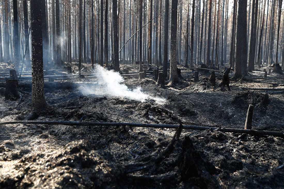 Skogen innen i brandområdet.