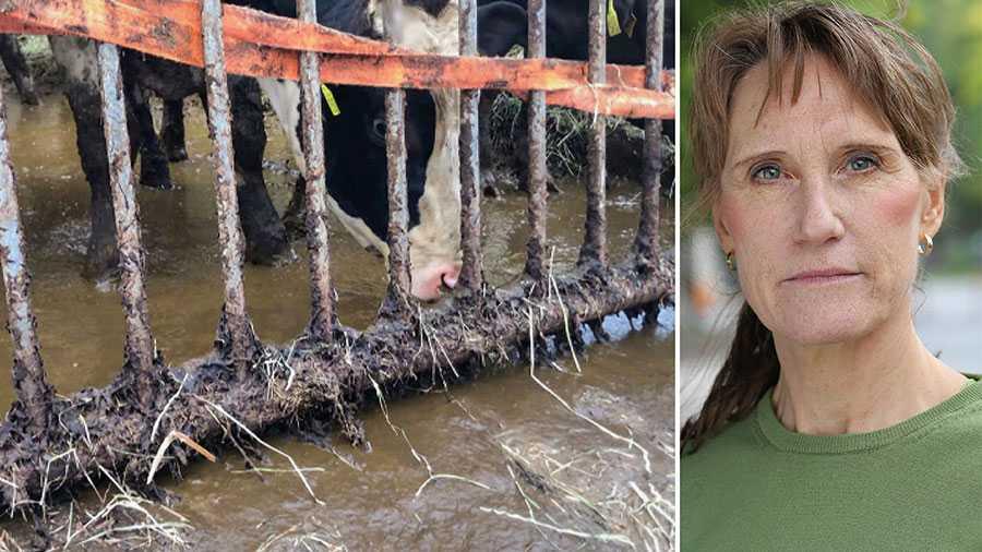 Är det svenska djurskyddet inte så bra som jag och många med mig brukar säga? Jo det är bra. Men vi ser också att det finns en grupp som inte sköter sina djur väl. Det är inte acceptabelt, skriver Jordbruksverkets generaldirektör Christina Nordin.