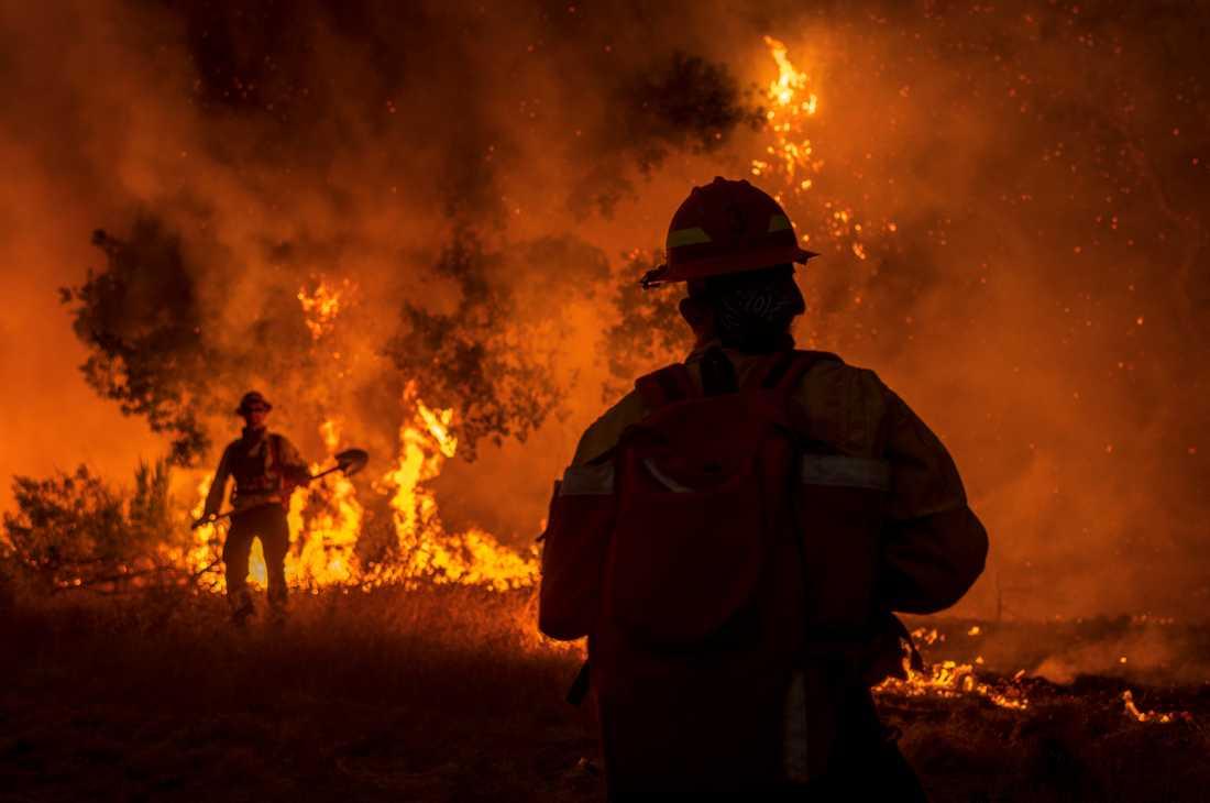 Nästan 40 skogsbränder rasar i Kalifornien.