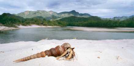 En eremitkräfta njuter av solen på Koh Tarutaos strand.