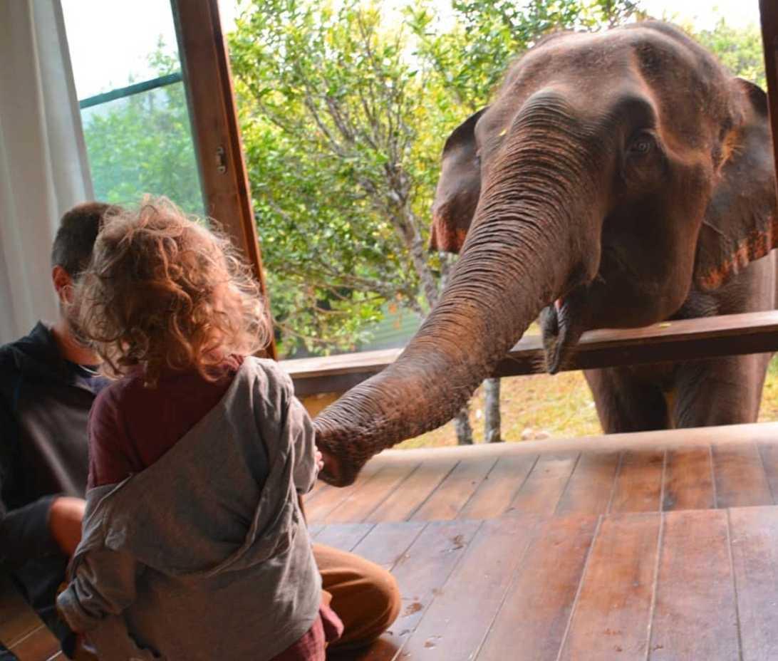 Än i dag pratar vilda om elefanterna