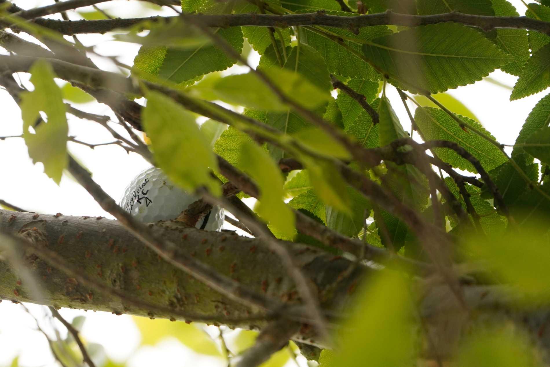 Bollen fastnade i trädet.
