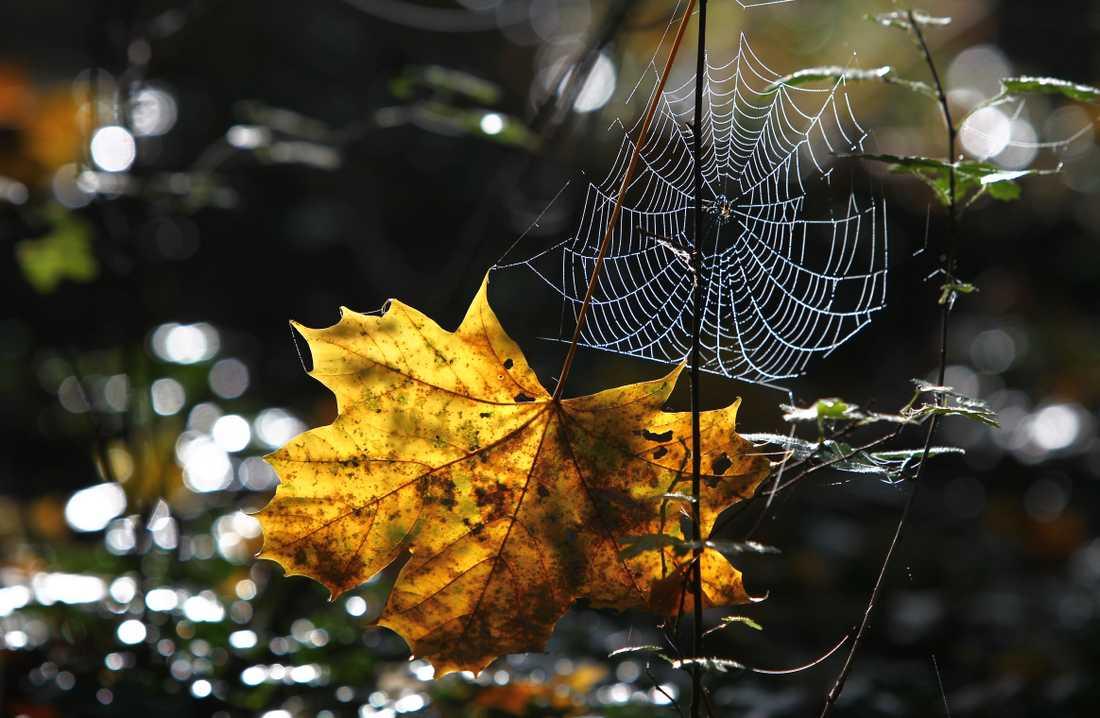 Hösten är här en till två veckor tidigare än vanligt.