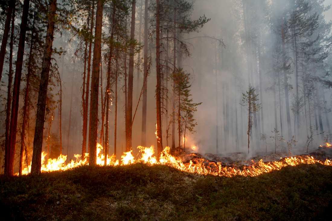 Flera skogsbränder härjar som följd av torkan.