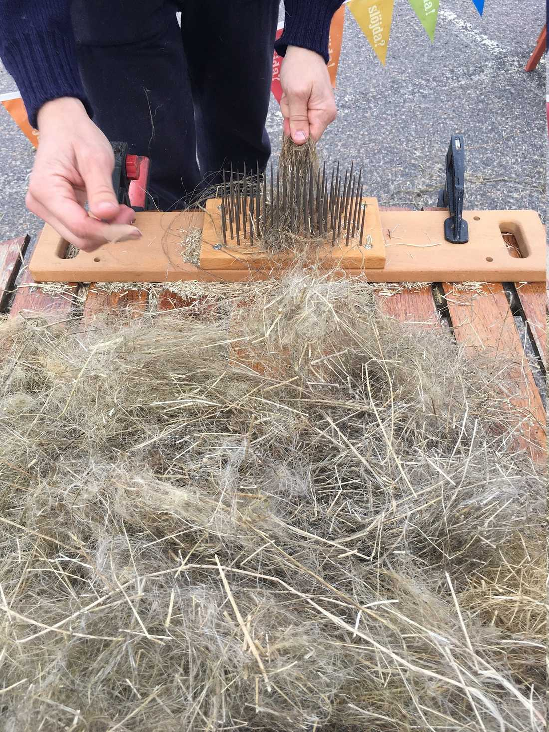 När man häcklar drar man linet genom en kam för att få fram fibrerna som sedan kan spinnas till garn.