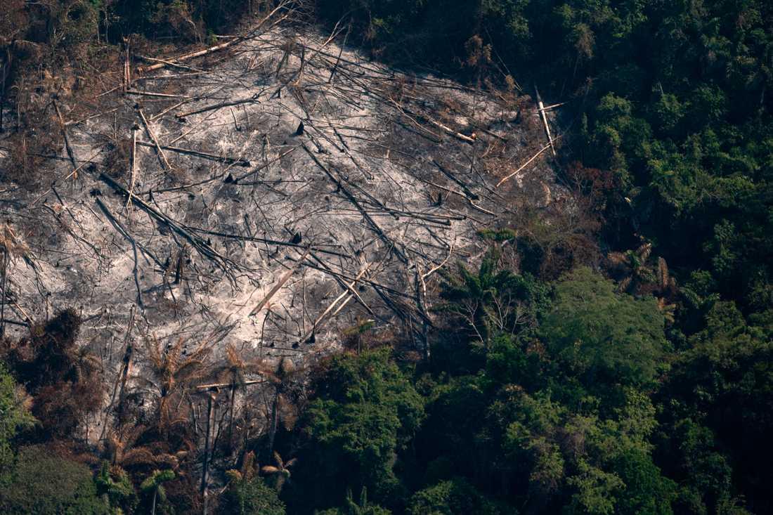 Ett nedbränt skogsområde i ett reservat i Amazonas i Altamira i den brasilianska delstaten Pará. Bilden är från förra sommaren.