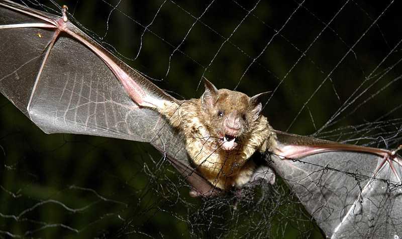 Blodtörstiga vampyrfladdermöss har dödat 20 personer i Peru de senaste månaderna genom att sprida rabies.