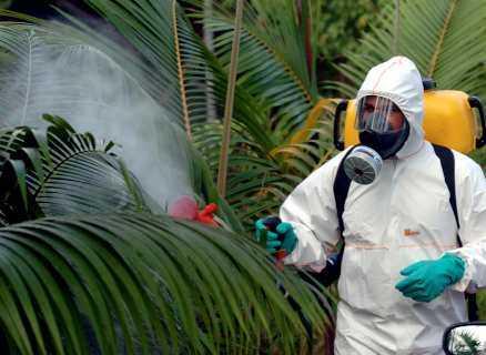 Myggen på Réunion bekämpas med kemikalier.