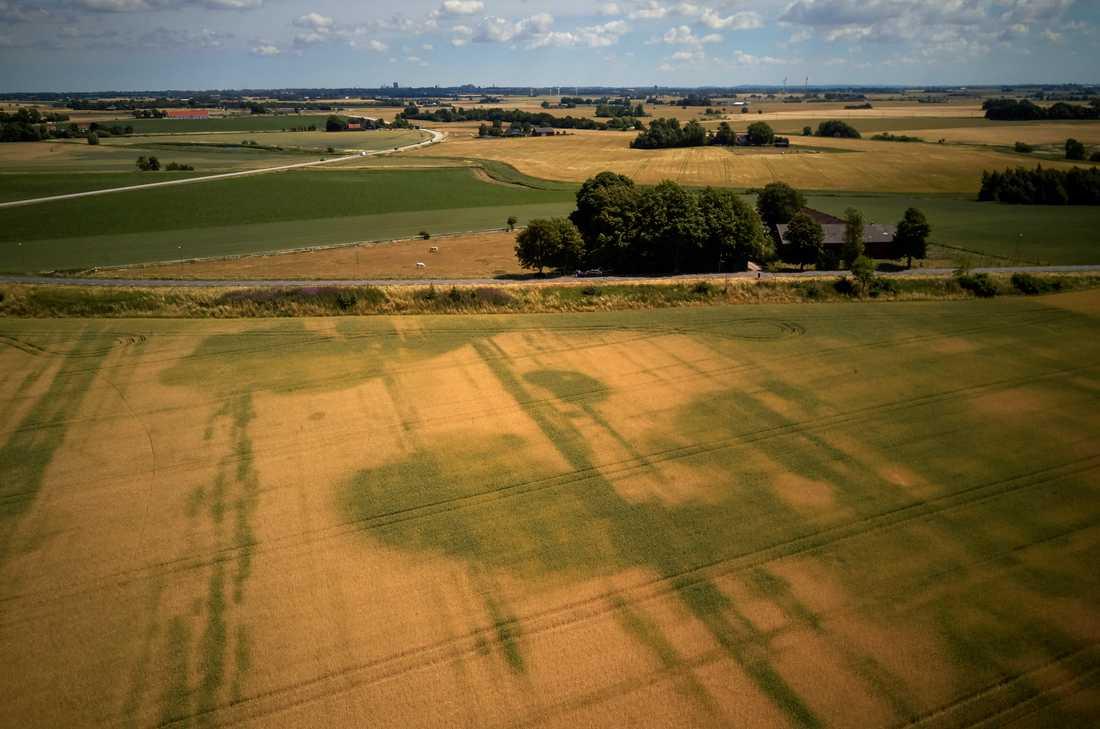 Fälten i Fjelie utanför Lund i juni. Lantbrukare Lars Albinsson klassar torkan som den värsta han varit med om. Arkivbild.