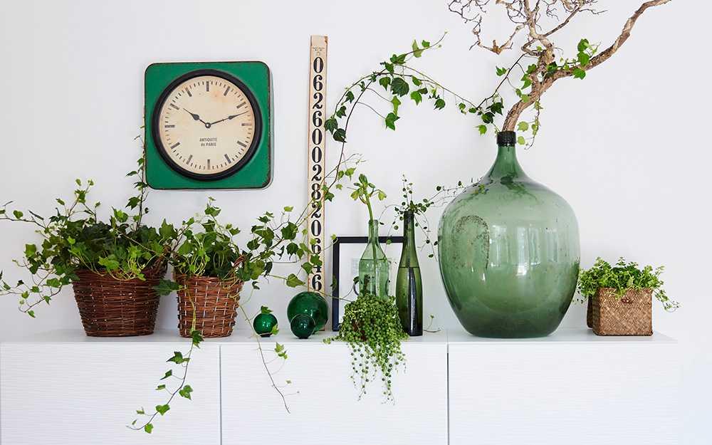 Krukväxter är inte bara vackra de renar din luft också.