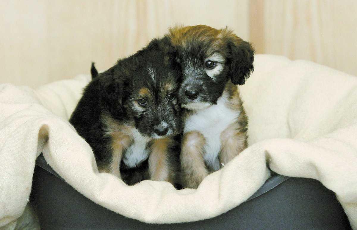 grymt behandlade Cinders (vänster) och Guy, bägge 7 veckor gamla letar nu efter ett nytt hem.