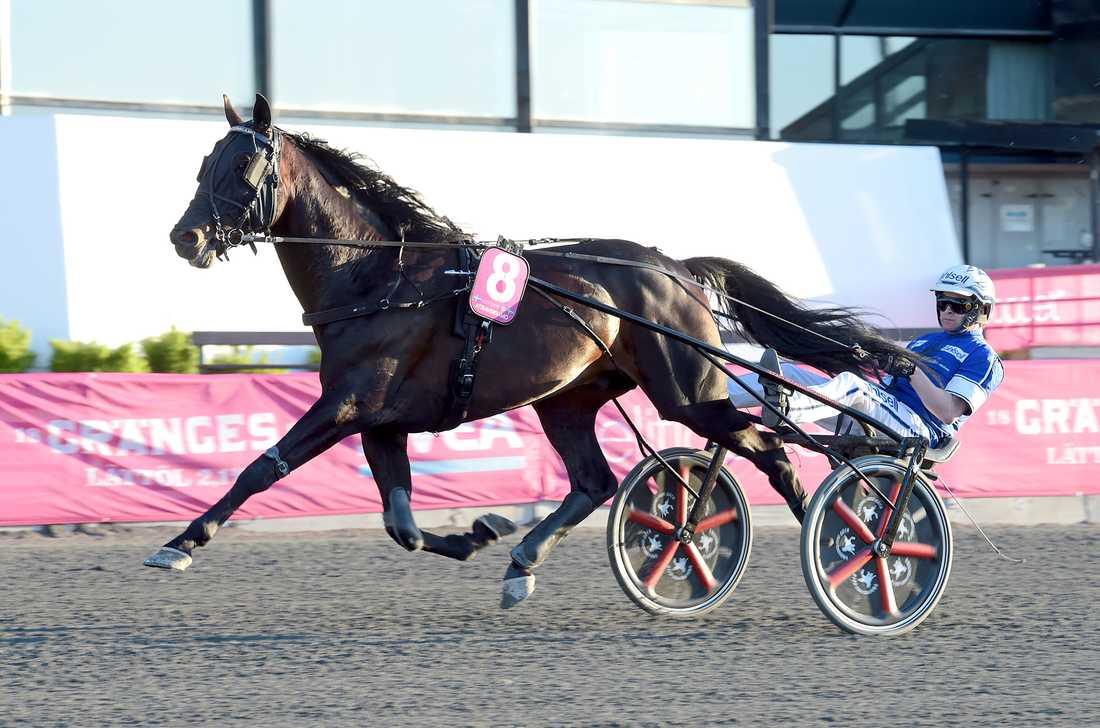 Attraversiamo med Erik Adielsson i sulkyn slutade trea i Elitloppet. I fjol vann duon Svenskt Travderby.