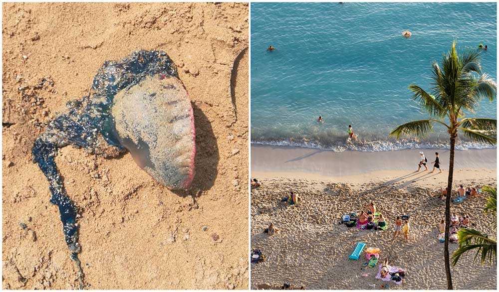 Livsfarliga blåsmaneter har synts på stränder vid Spaniens kust.