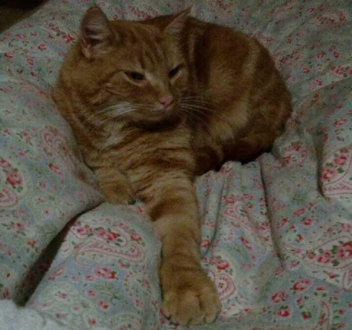 Tiger var borta i två år.