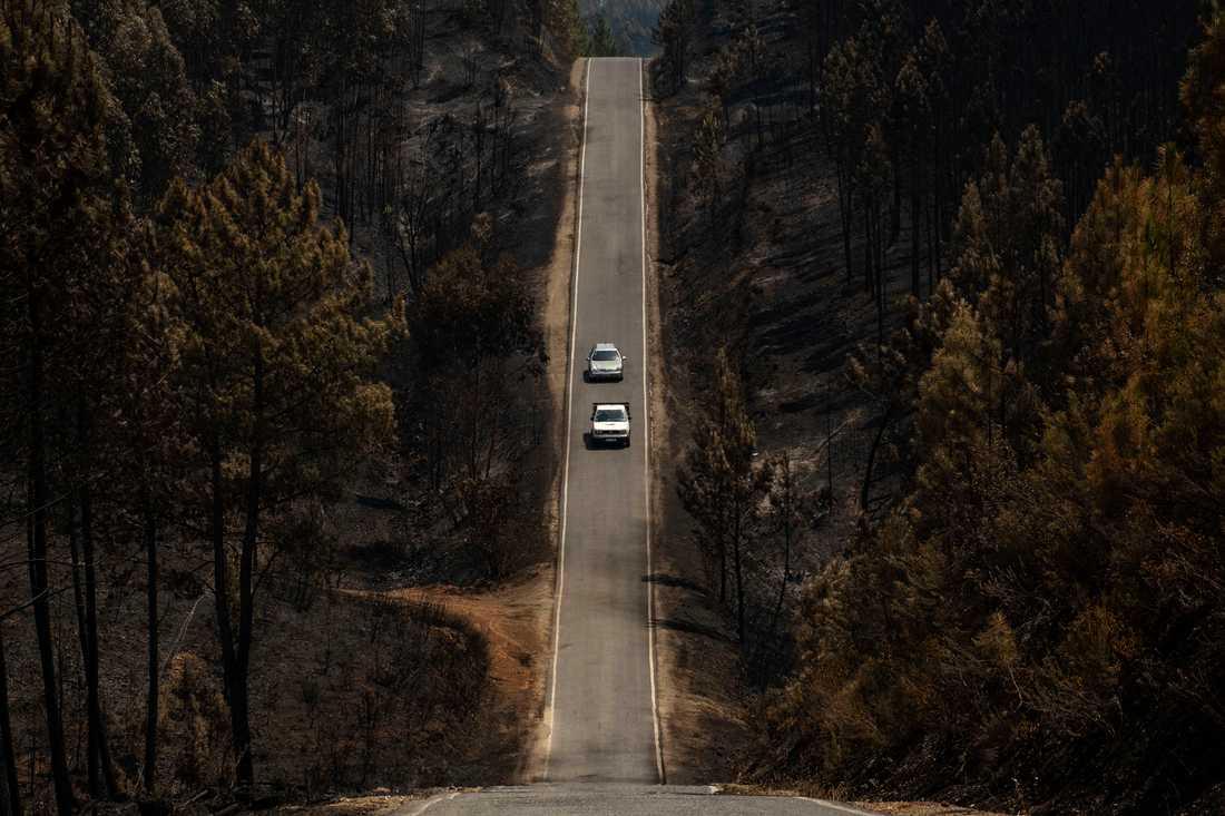 Svarta träd kantar en väg i centrala Portugal efter skogsbränder under sommaren 2019. Arkivbild.