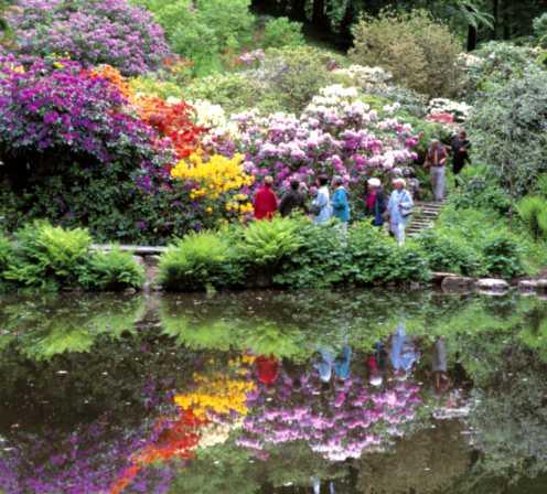 Njut av blomsterprakt på Sofiero 28-30 augusti.