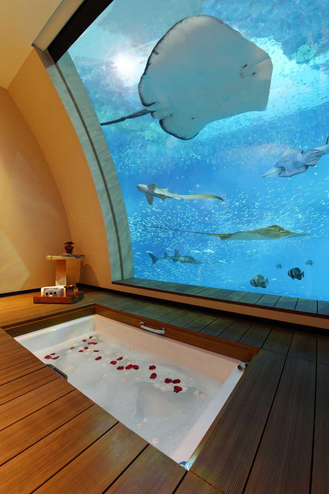 Också i badkaret har du närkonakt med alla fiskar.