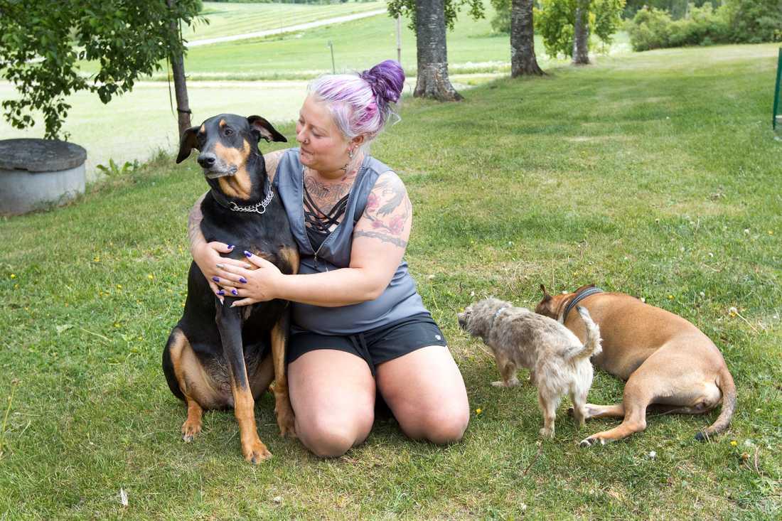 Dobermann Kani, lillvovven Rina och den bruna hunden Neela bor också på gårdeb.