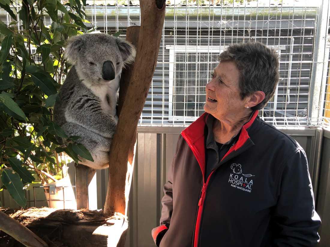 Sue Ashton tillsammans med koalan George.