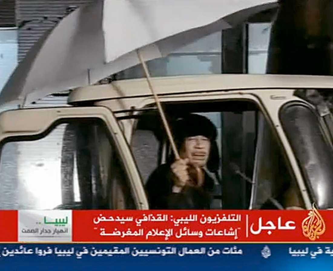 tyrann med öronlappar Gaddafi försöker desperat klamra sig fast vid makten. I natt talade han i statstelevisionen och förnekade att han skulle ha gett upp. Diktatorn var klädd i vintermössa med öronlappar och bar paraply – sittande i en bil. Samtidigt bombades i går folket i Libyen från stridsflyg och helikoptrar. Minst 233 |människor uppges ha dödats de senaste fyra dagarna.