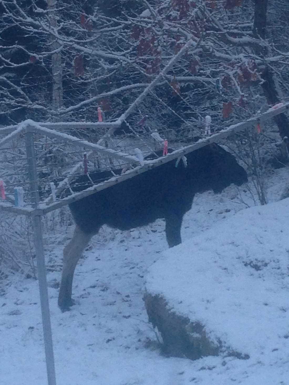 Helge har även hälsat på under vintern.