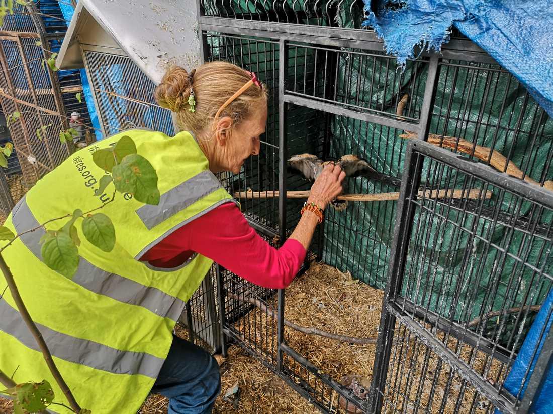 Inga Schwaiger, djurräddare inom Wires, på hennes tomt i Balmoral där hon vårdar skadade djur.