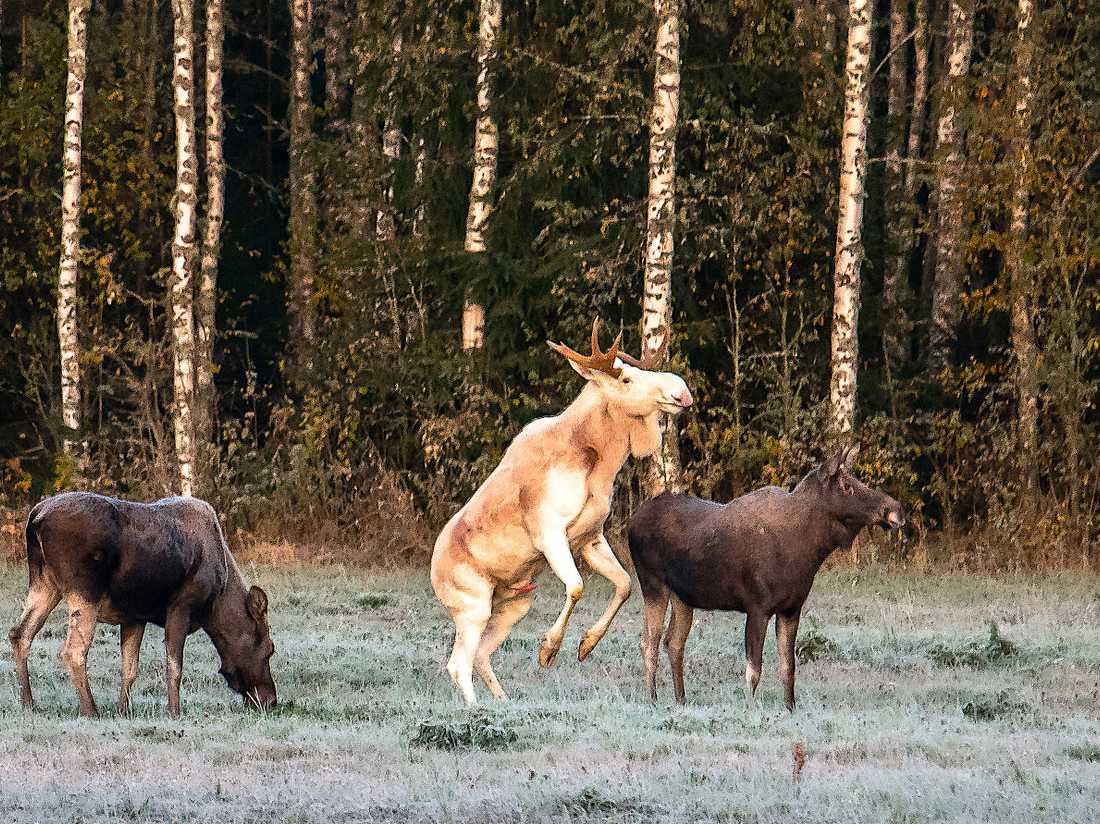 Händelsen inträffade i skogarna runt Arvika första helgen i oktober.