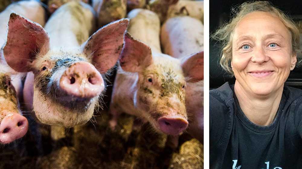 Varför köttkonsumtionen har ökat och mer mat slängs behöver man inte vara professor för att förstå. Lägre pris, skambilligt, och högre inkomst leder till högre konsumtion, en mycket enkel ekvation! Skriver debattören.