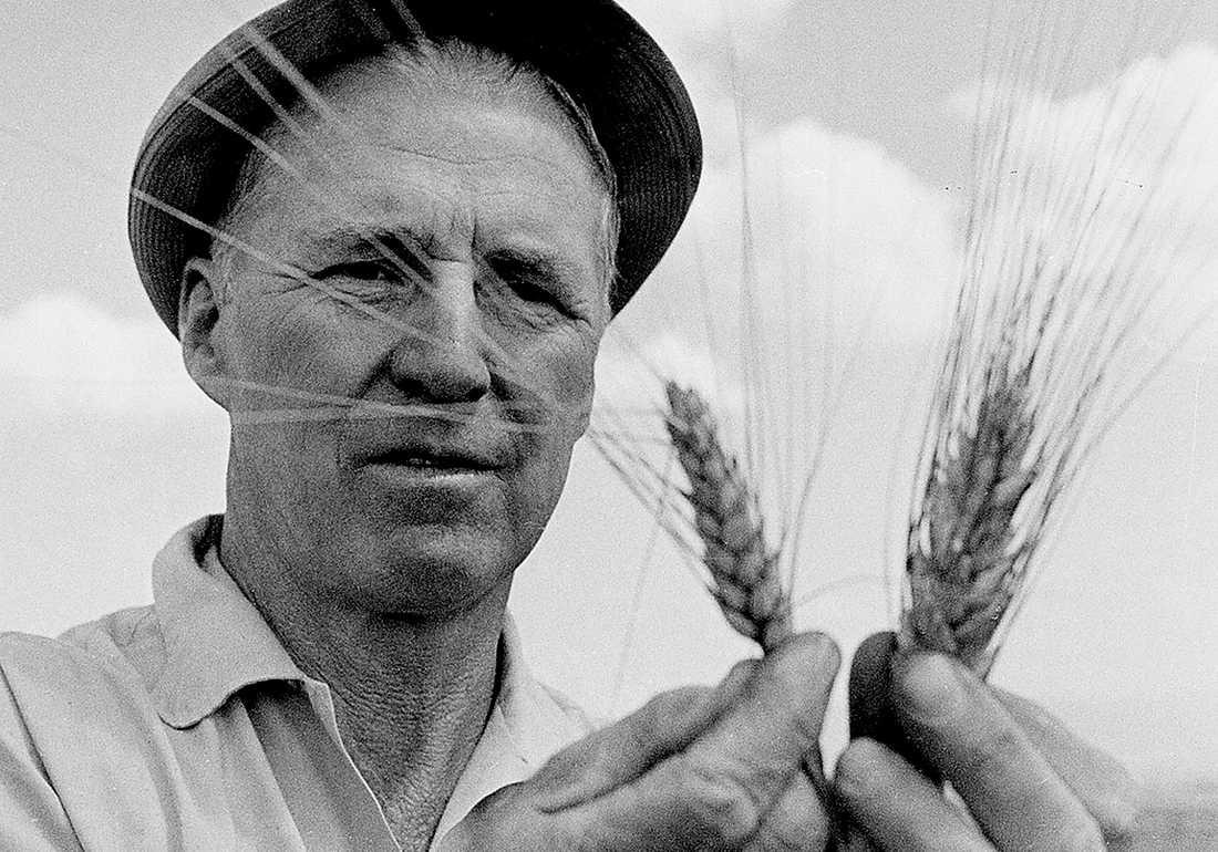 Forskaren Norman Borlaug (1914–2009) banade väg för den gröna revolutionen med utveckling av förädlade grödor och nya metoder för jordbruk i u-länder. Han fick Nobels fredspris 1970.