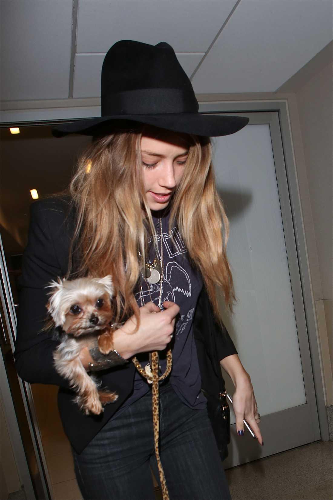 Depps kärlek Amber Heard med en av hundarna.