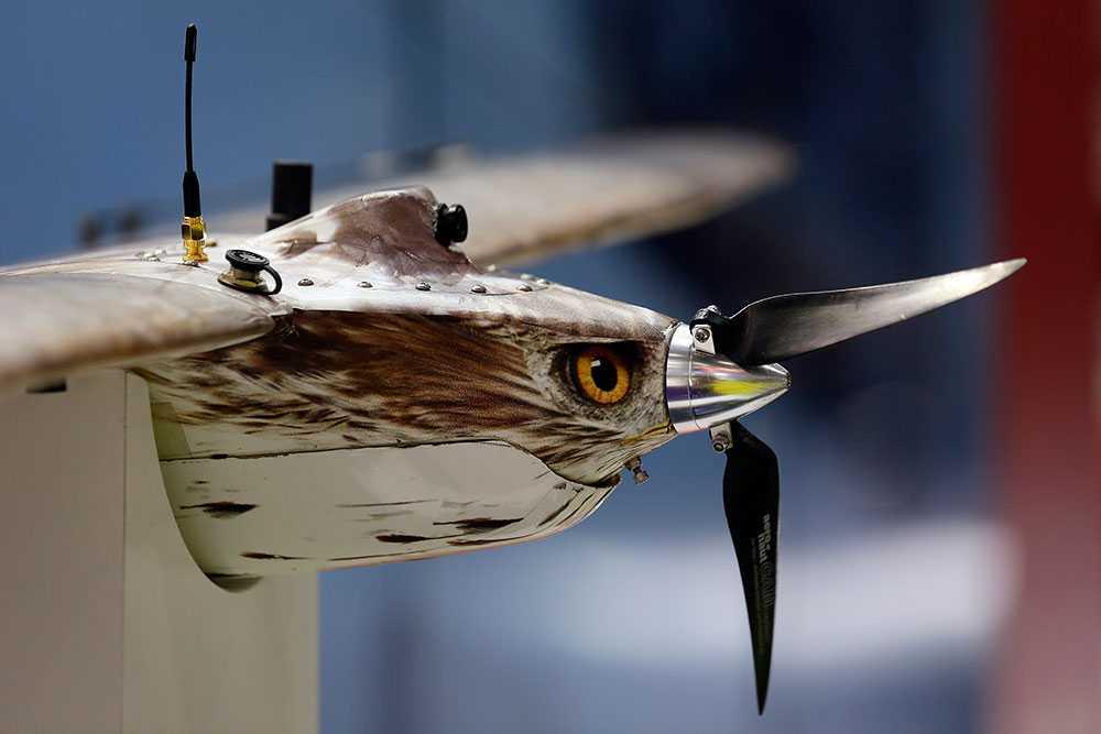 En drönare kamouflerad som en rovfågel visas på en mässa i London. Obemannade flygfarkoster har blivit en självklarhet vid spaning och rekognosering för USA och andra stormakter och designen utvecklas ständigt.