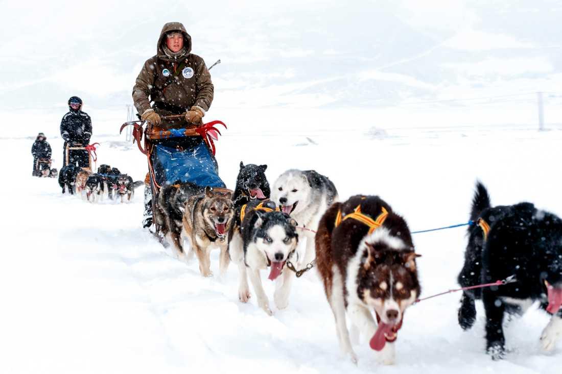 Färd med slädhundar på Svalbard. Arkivbild.