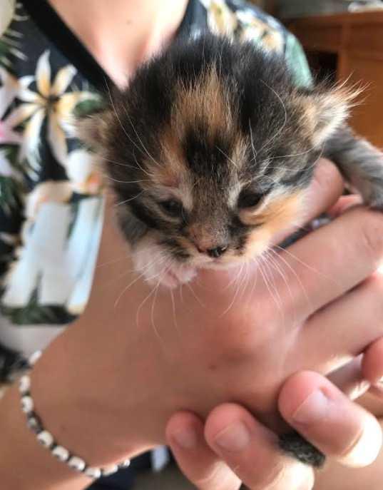 Föreningen har tagit hand om flera hundra katter.