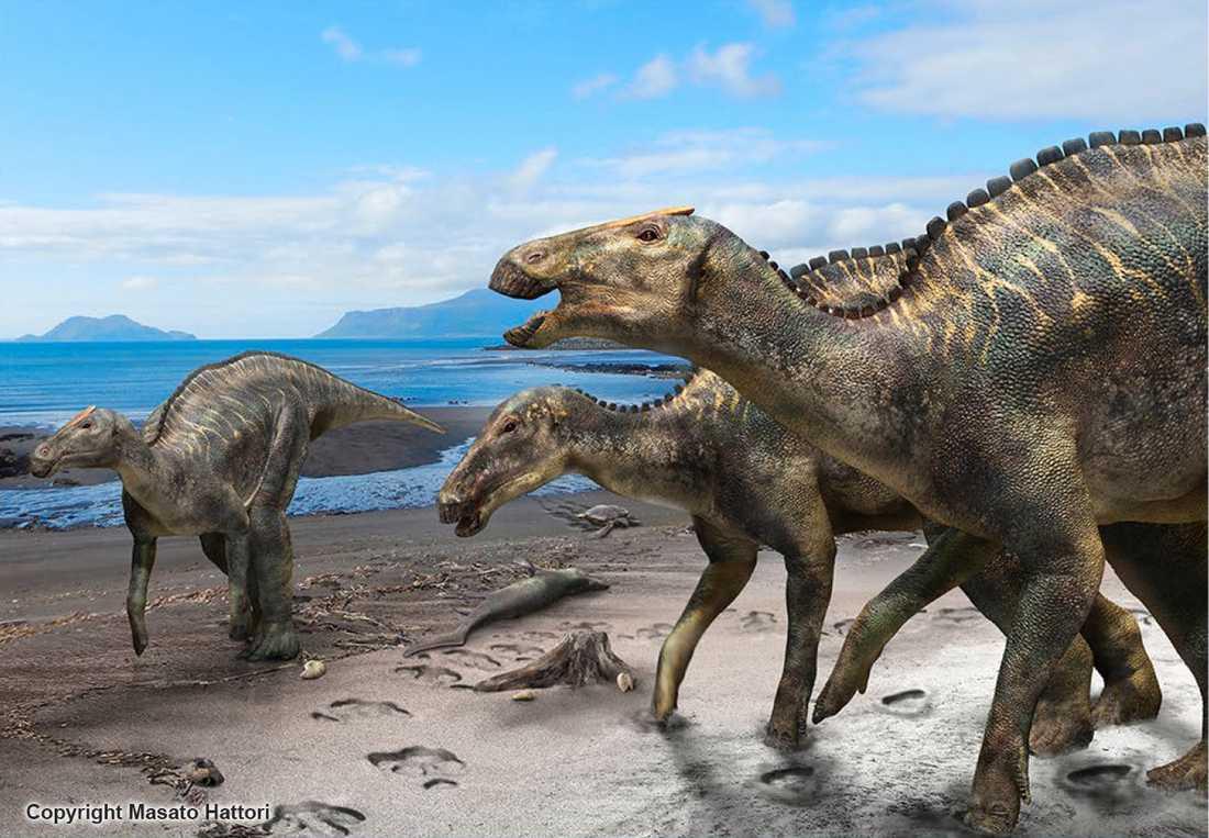 Ett skelett från en helt ny dinosaurieart har hittats i Japan. Forskarna har gett arten namnet kamuysaurus japonicus, japansk drakgud.