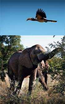 I naturreservatet Mokolodi utanför Gabarone kan man se både elefanter och spännande fåglar på nära håll.