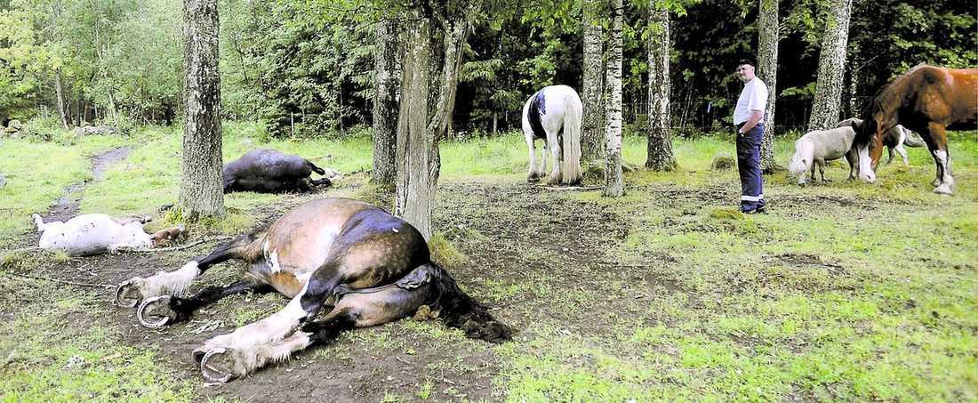 """katastrof """"Jag har förlorat min bästa vän"""" säger Chatrin Stensson, ägare till de tre hästar som i tisdags dödades av blixten."""