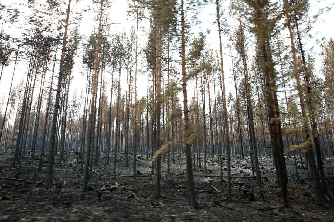 Skogsbranden vid Kårböle strax utanför Ljusdal var en av de större bränderna som härjade i somras.