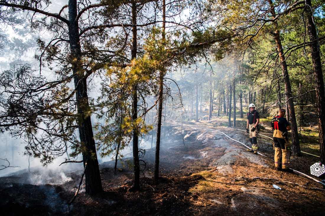 Skogsbrand i Grimstaskogen i Vällingby, sommaren 2018.