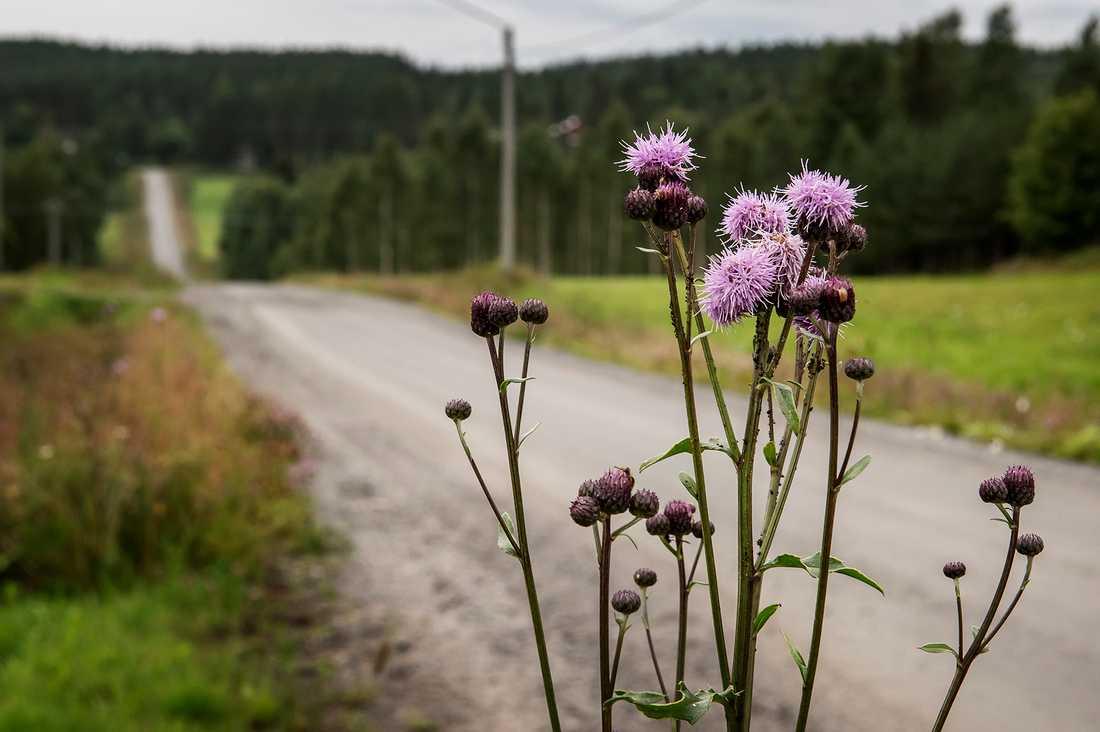 Den 55-åriga kvinnan och hennes 27-årige son som mördades på Ikea i Västerås hörde hemma i en liten by utanför Skellefteå.